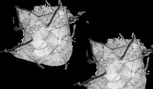 rex-footprint